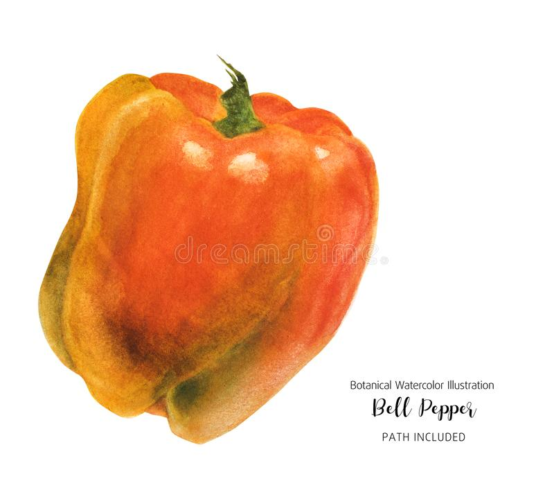 Glance Orange Bell Pepper foto de stock royalty free