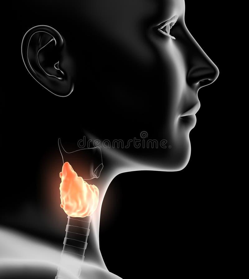 Glande thyroïde accentuée d'une femme, médicalement illustration 3D sur le fond noir illustration de vecteur