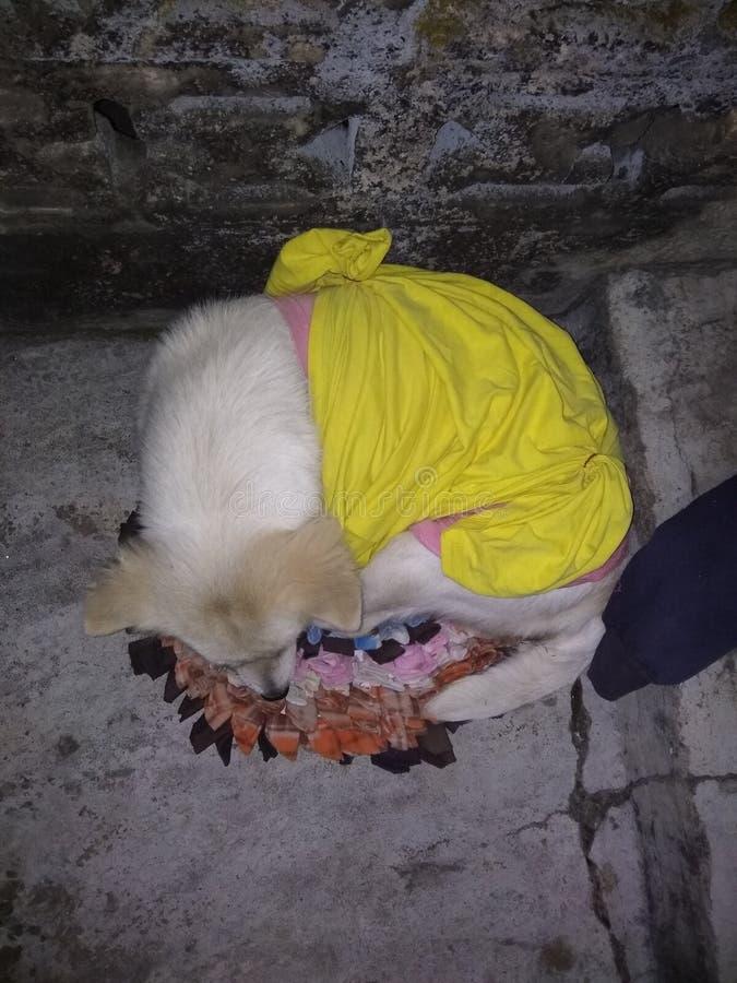 Glans heldere doek met hond royalty-vrije stock afbeeldingen