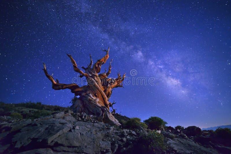Glans onder sterrige hemel stock fotografie