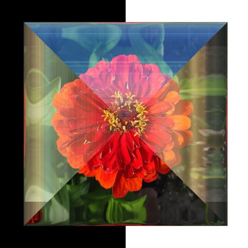 glansig fyrkantig knapp 3D med den verkliga blomman arkivfoto
