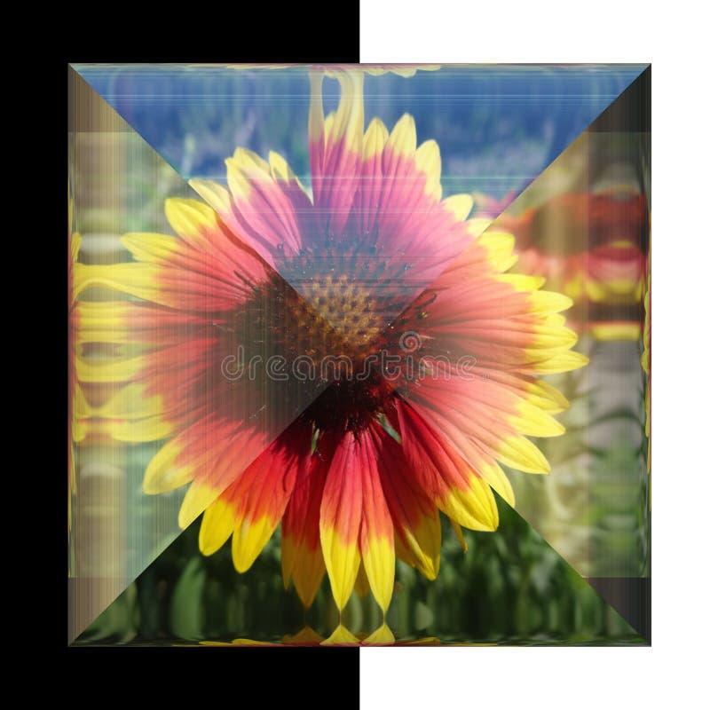 glansig fyrkantig knapp 3D med den verkliga blomman royaltyfri bild