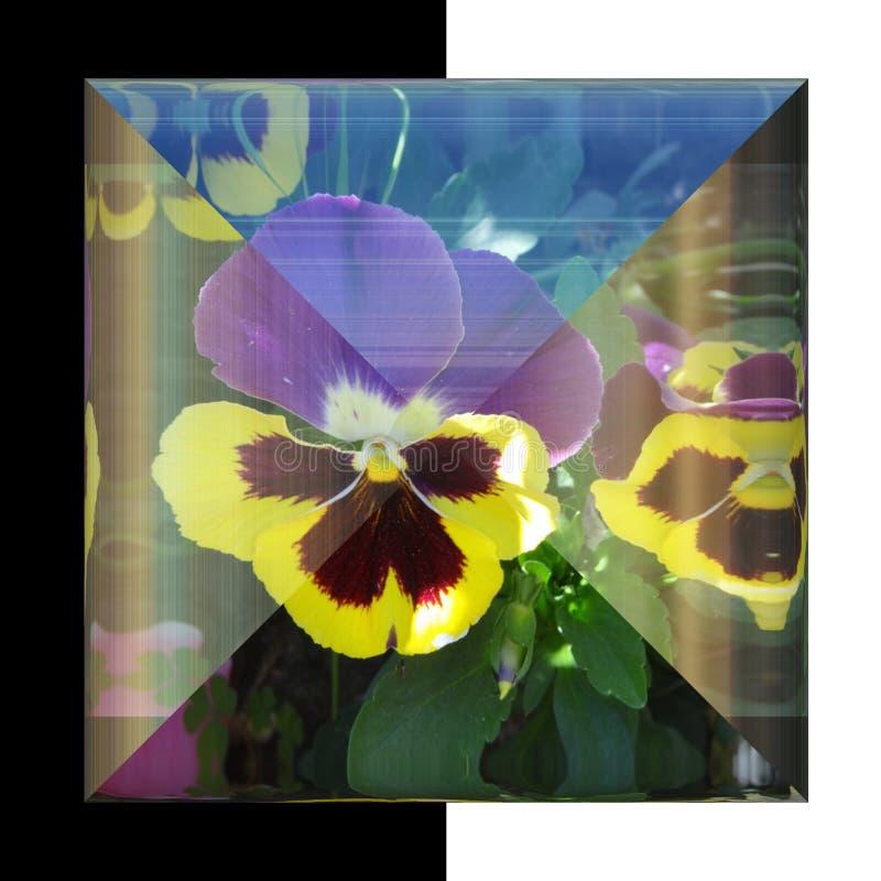 glansig fyrkantig knapp 3D med den verkliga blomman arkivfoton