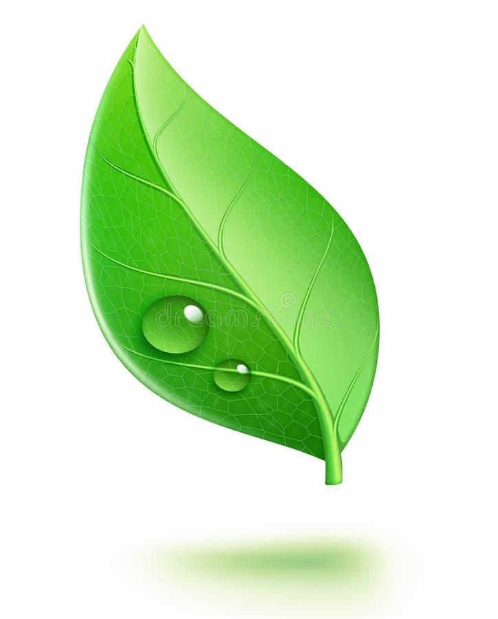 Glansowany zielony liść ilustracja wektor