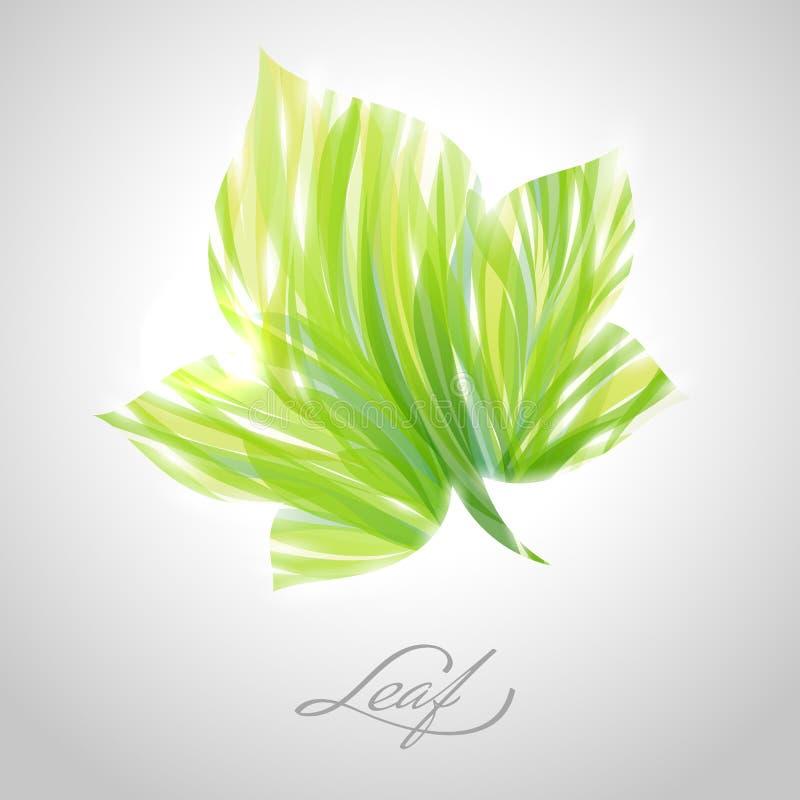 Glanzend gestreept esdoornblad. Vector illustratie. stock illustratie