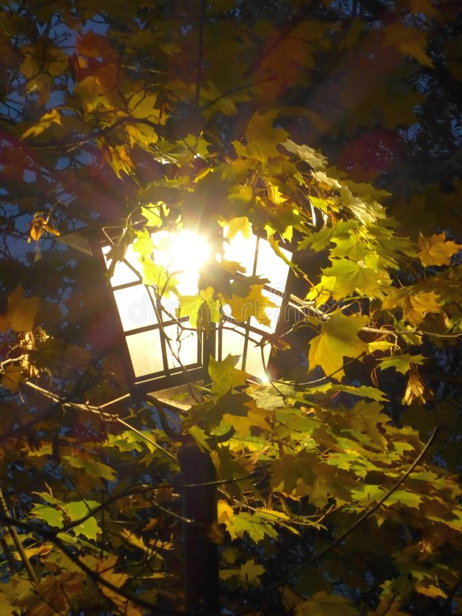 Glanzende Lantaarn in de de Herfstbladeren stock afbeeldingen