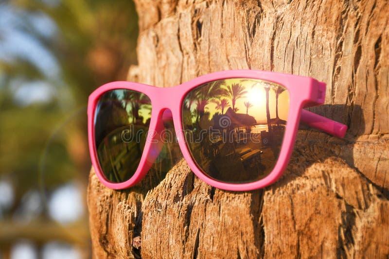 Glanzende roze geïsoleerde zonnebril op de palmboomstam stock foto
