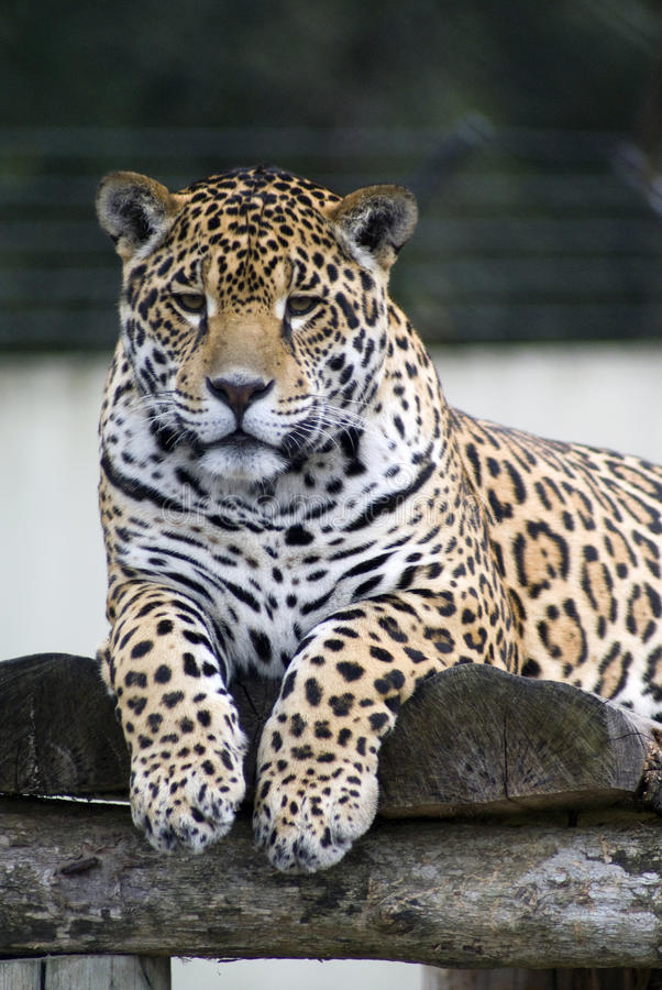 Download Glare stock photo. Image of hunter, wild, glare, predator - 14246192