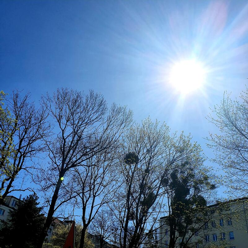 A glaring sun over the treetops. On a blue sky royalty free stock photography