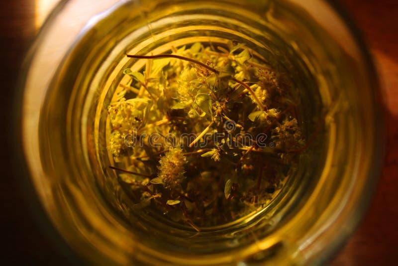 Glas aftreksel wilde thyme stock afbeeldingen