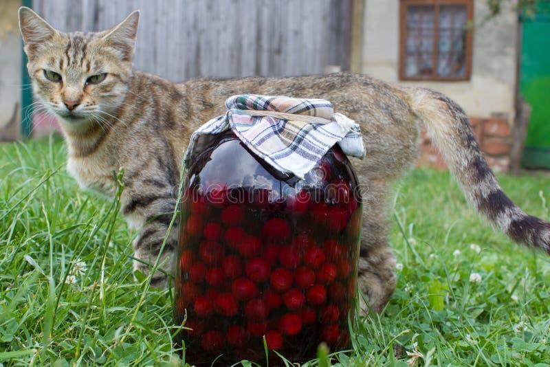 Glas in Büchsen konservierte Kirschen lizenzfreie stockfotografie