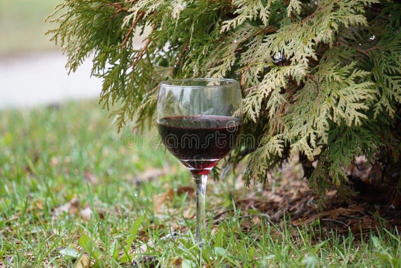 Glas des Rotweins und der Flasche lizenzfreies stockfoto