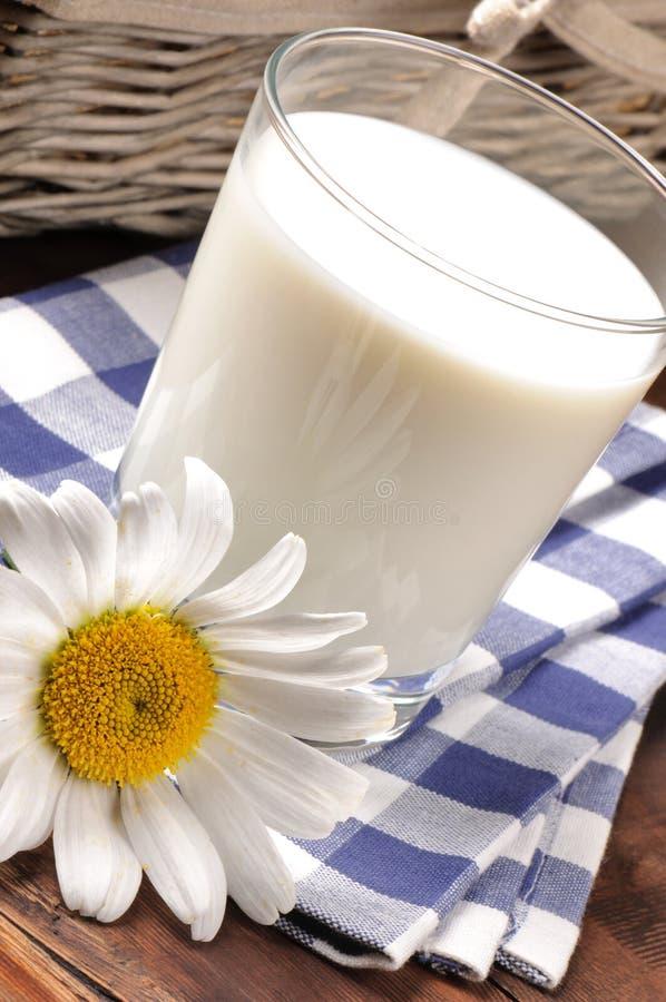 Glas Milch mit Gänseblümchen lizenzfreies stockbild