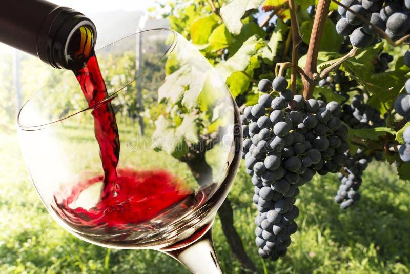 Glas mit Rotwein stockfoto