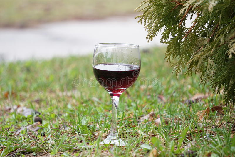 Glas Rotwein auf grünem Gras lizenzfreies stockbild