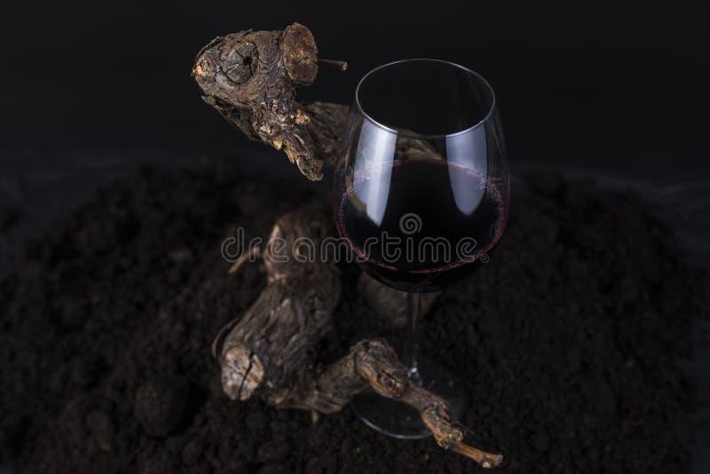 Glas Rotwein mit Rebe in einem schwarzen Hintergrund lizenzfreie stockfotografie