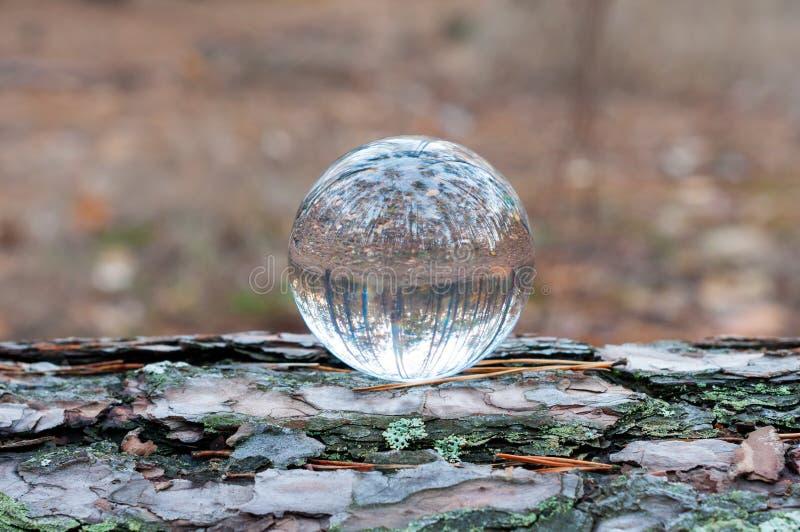 Glas transparante bal op boomboomstam met de herfst royalty-vrije stock afbeeldingen