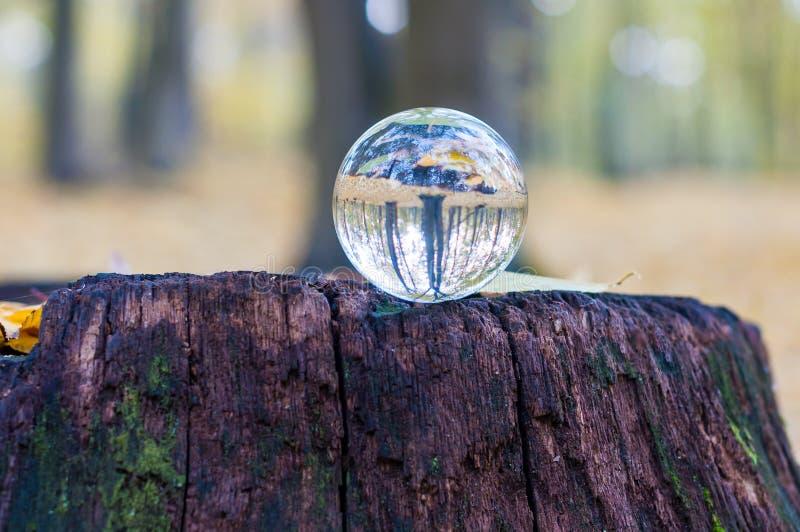 Glas transparante bal op de zegel met de herfst royalty-vrije stock afbeeldingen