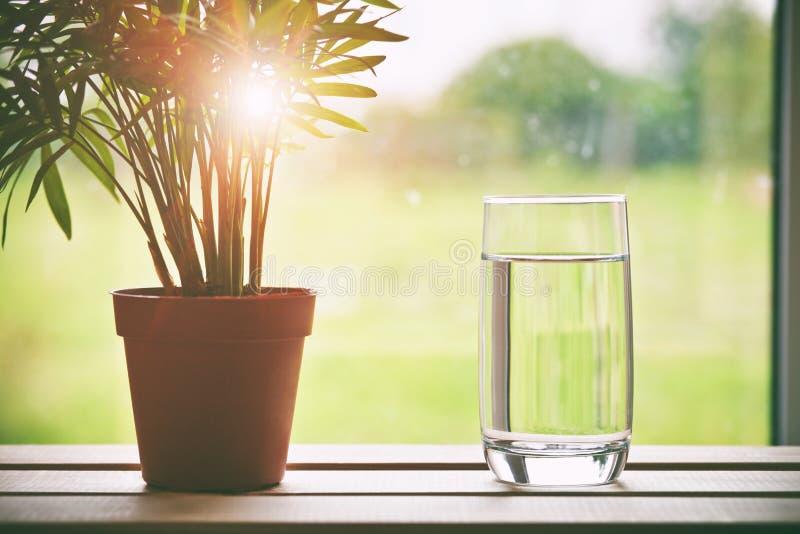 Glas van zuiver natuurlijk water en groene bloem in pot op natuurlijk m stock fotografie