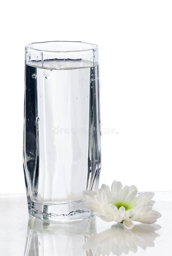 Glas Wasser mit Blume stockbild