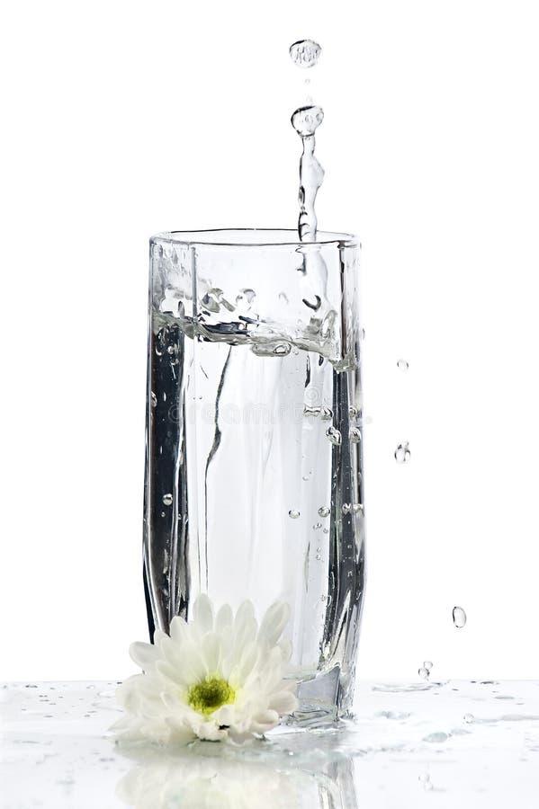 Glas Wasser mit Spritzen und Blume stockfotografie