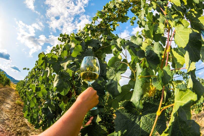 Glas wijn en wijngaarden royalty-vrije stock foto