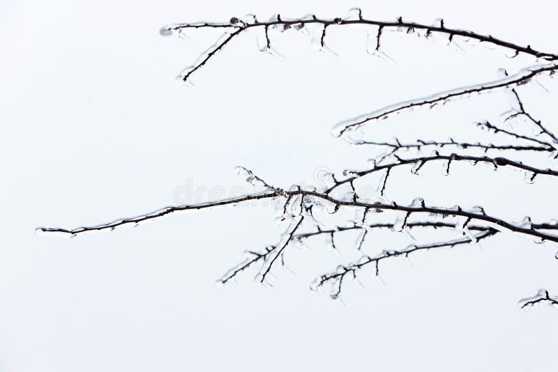 Glasad trädfilial efter vinterisstorm, snö och fryst regn royaltyfri foto