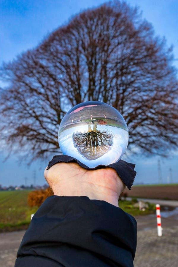 Glasbollsbilder med träd royaltyfri fotografi