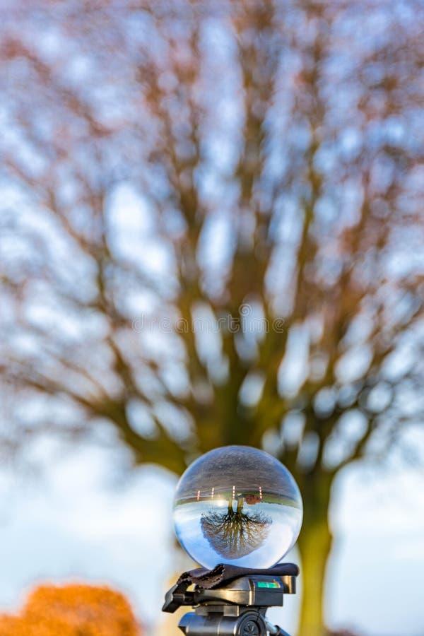 Glasbollsbilder med träd royaltyfri bild