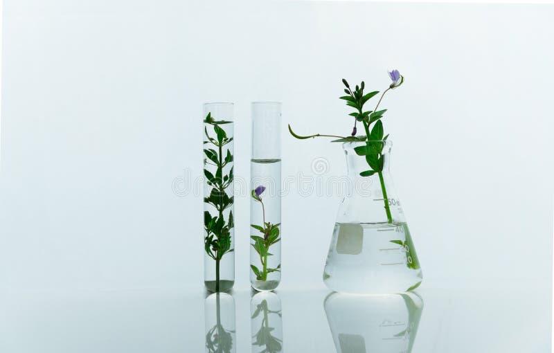 Glasfles en reageerbuizen met groene purpere wilde bloem voor medische gezondheid of kosmetisch het laboratoriumwit van het weten stock fotografie