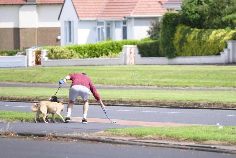 Glasgow Strathclyde/Skottland - Juni 20th 2019: Mannen med två hundkapplöpning tappar bollen i väg och väljer den upp att orsaka  arkivfoto
