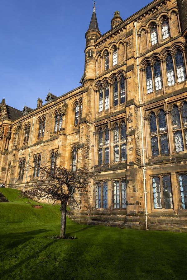 Glasgow University un giorno soleggiato con un albero fuori immagine stock