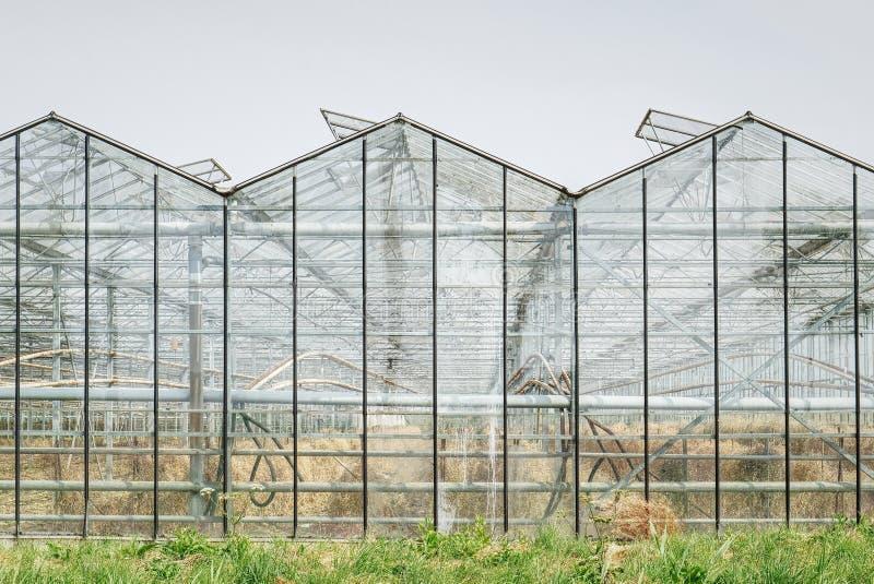 Glashaus mit entwässerter Ernte vom heißen Sommer lizenzfreies stockfoto