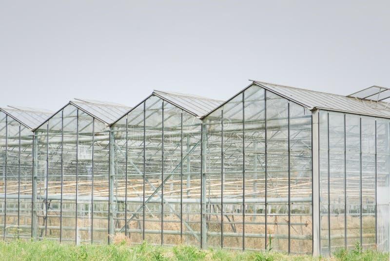 Glashaus mit entwässerter Ernte vom zu trockenen Sommer lizenzfreies stockbild