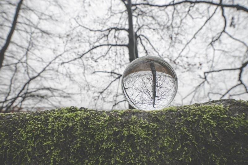 Glaskugel auf einer großen Niederlassung umfasst mit grünem Moos lizenzfreie stockbilder