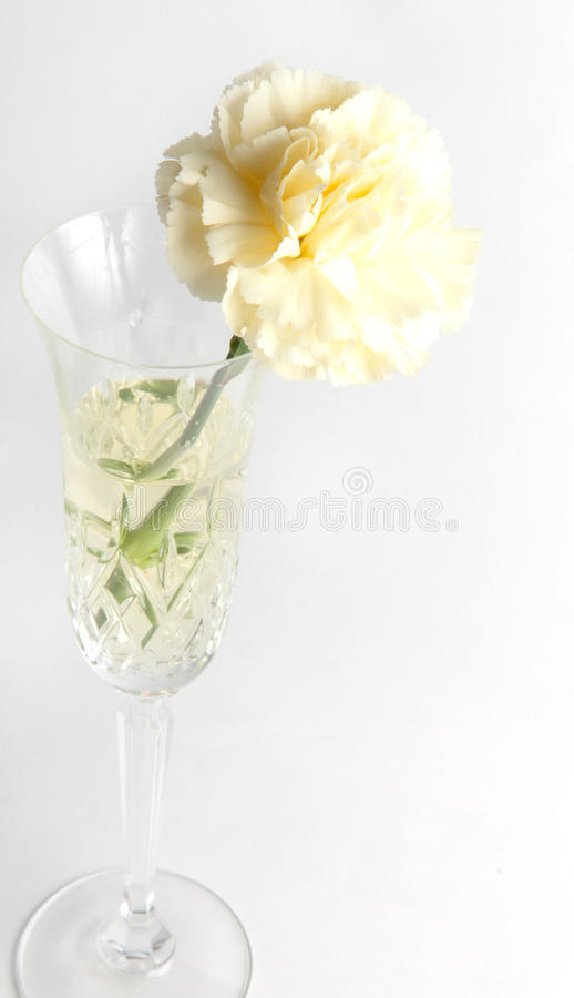 Free Glass And Carnation 2 Stock Images - 9812024
