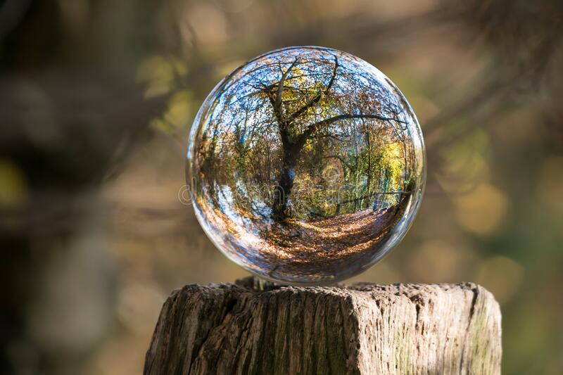 Glass ball reflecting forest stock photo