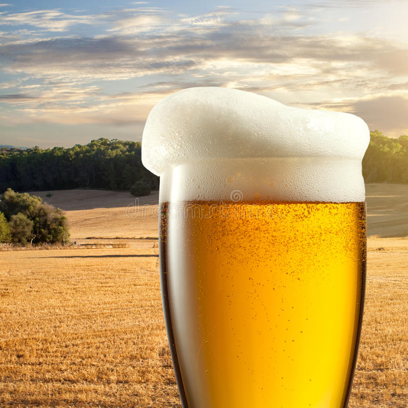 Glass of beer against wheat field. And sunset royalty free stock image