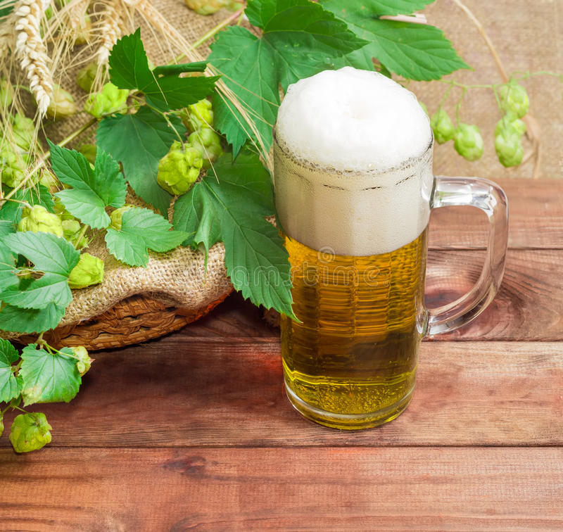 Glass of beer, branches of hops, barley and wheat spikes stock photo