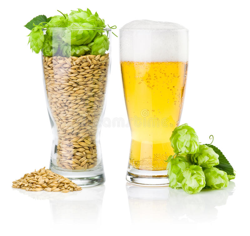 Glass of beer and cup full of barley and hops royalty free stock images