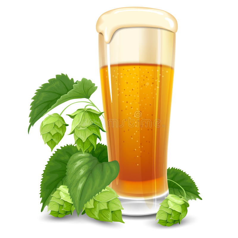 Glass of beer and hops. On white background stock illustration