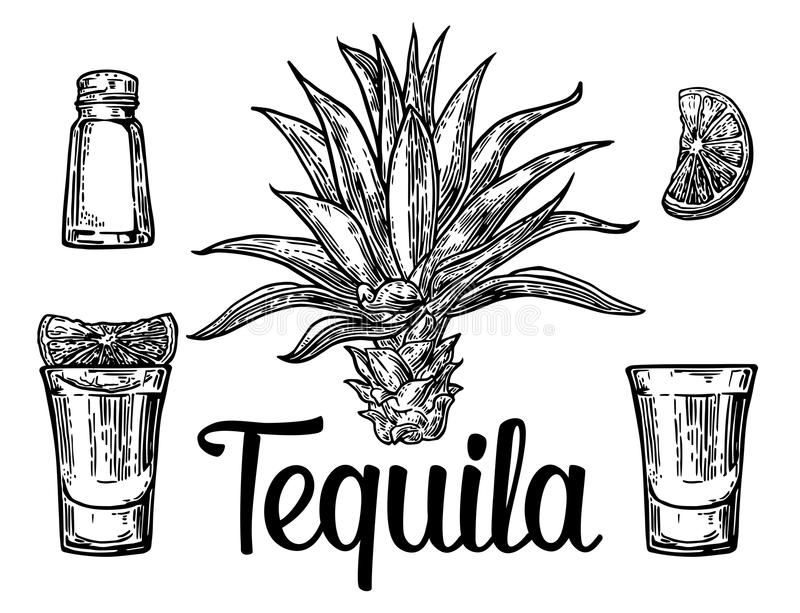 Glass and botlle of tequila. Cactus, salt and lime Hand drawn sketch set of alcoholic cocktails. Vector illustration. Glass and botlle of tequila. Cactus, salt vector illustration