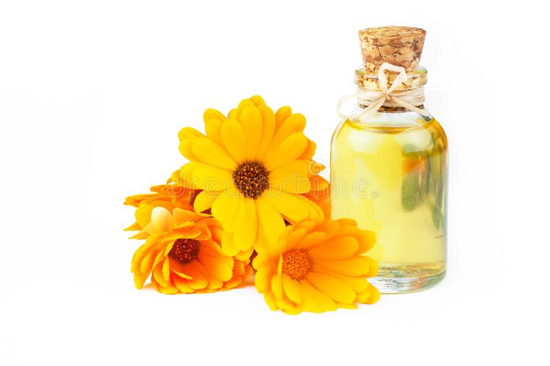 Glass bottle of calendula essential oil with fresh marigold flowers isolated on white background royalty free stock photos