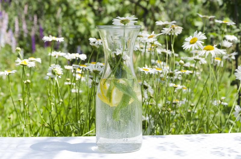 Glass bottle of cold mint water with lemon against daisies meadow.Sunny morning in the garden and fresh healthy drink for early br. Closeup of bottle of cold stock image