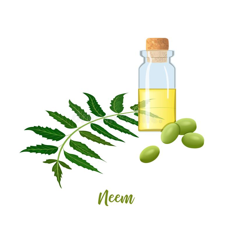 Glass bottle with cor, Neem oil, leaf branch, flowers and pods. Ayurveda Herb. vial. Oilplant for medicine, cosmetics royalty free illustration