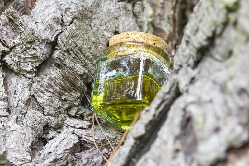 Glass bottle with cork cap with green-yellow nectar oil. Located on the bark of coniferous wood stock image
