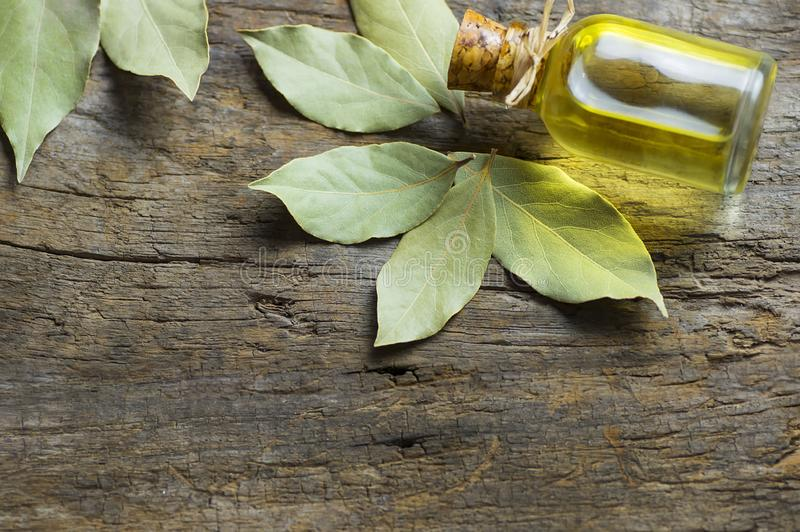 Glass bottle of essential bay laurel oil with daphne leaves on wooden rustic background royalty free stock photos