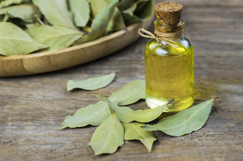 Glass bottle of essential bay laurel oil with daphne leaves on wooden rustic background royalty free stock photo