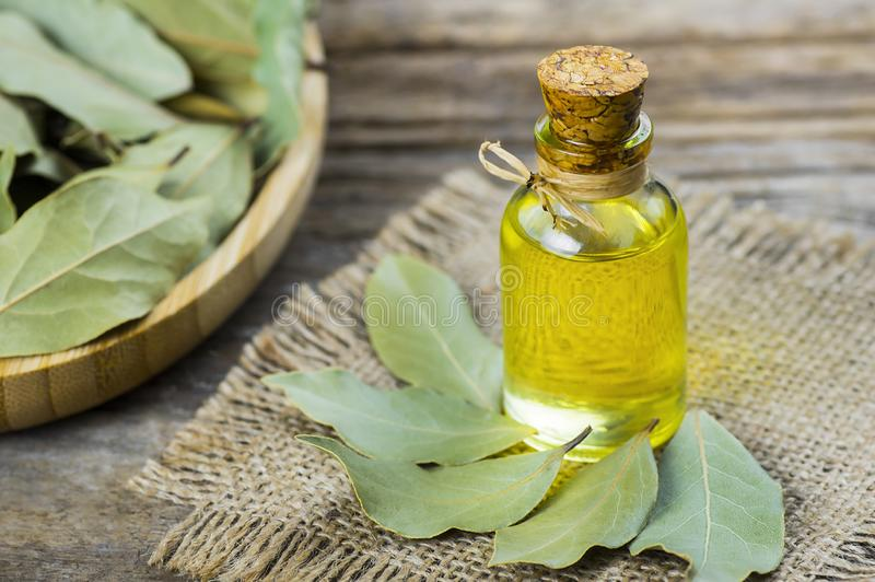 Glass bottle of essential bay laurel oil with daphne leaves on wooden rustic background stock photo
