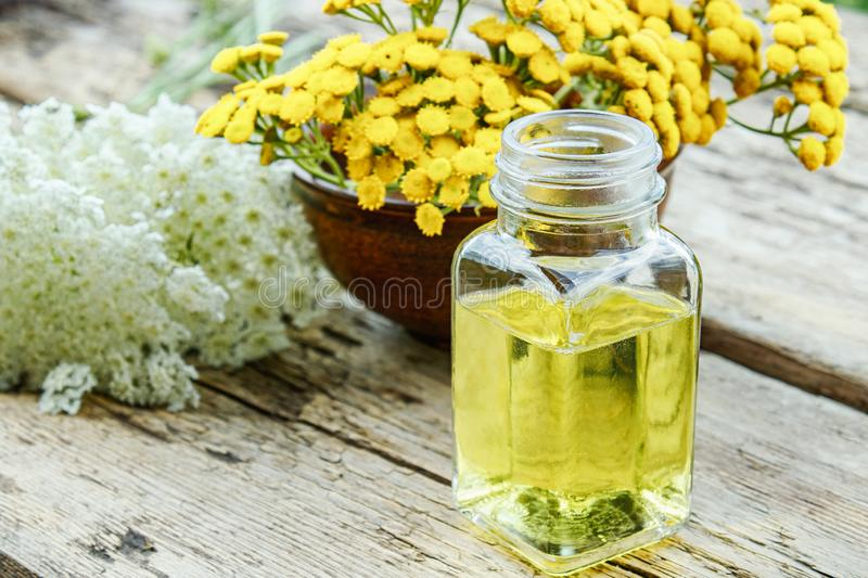 Glass bottle of essential oil or tincture of extract near yellow fresh flowers of tansy and yarrow on wooden background. Herbal stock photo
